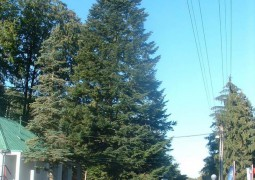 malacky-vianocny-stromcek