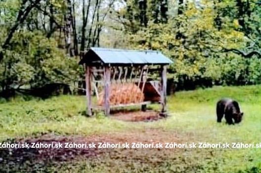Záber fotopasce z obce Závod (20.5.)