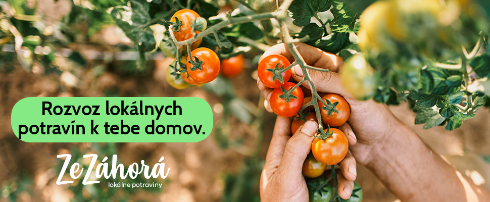 ZeZáhorá rajčiny